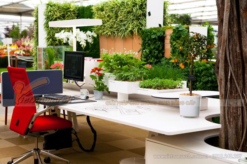 Thiết kế sân vườn văn phòng 3